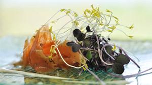 Truite marinée à cru au poivre fumé et aux herbes