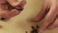52_croustade_cacao.jpg