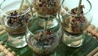 Croustillant de saumon en verrine, sauce ponzu
